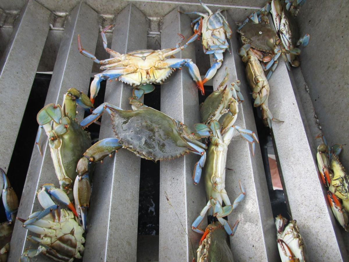 crab season in outer banks proves fun for kids and grown ups alike