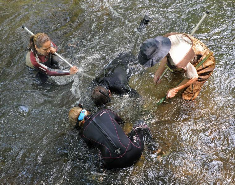 Scientists work to save regional salamander | Local News