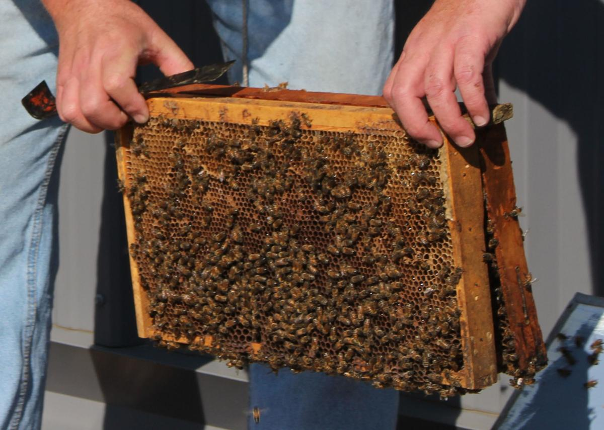 Bee Keeping 02