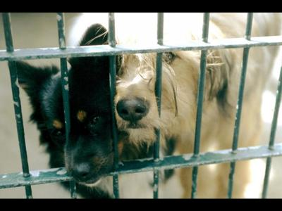 57487641960c Not many options for stray animals picked up after hours, over ...
