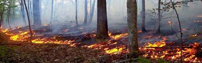 Division of Forestry issues guidance for Fall Forest Fire Hazard Season