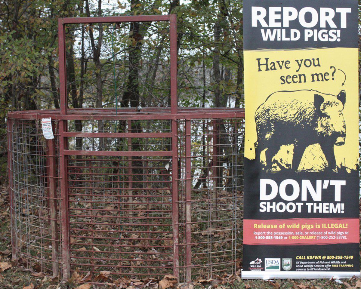 Federal agencies plan for winter feral hog eradication