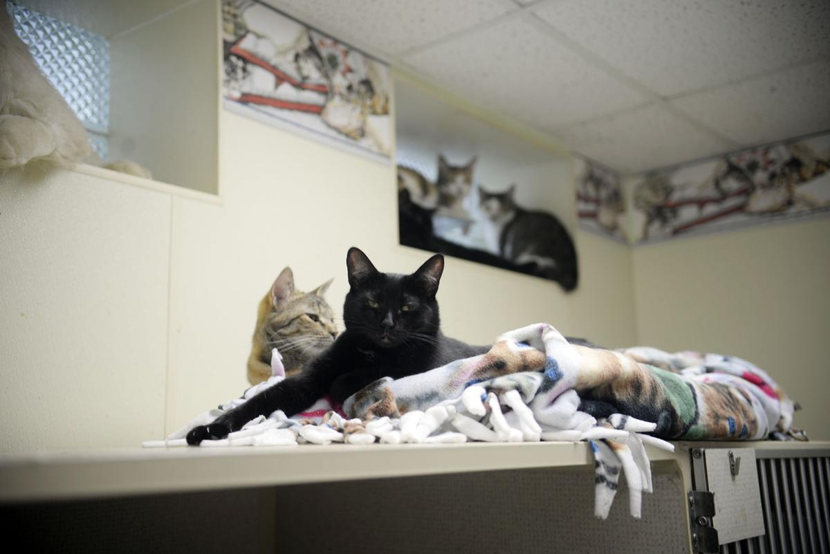 Fayette Friends of Animals overwhelmed with unwanted pets