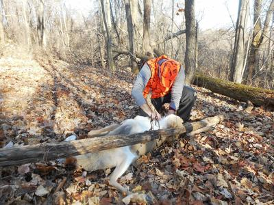 Deer statistics hinge on hunter cooperation