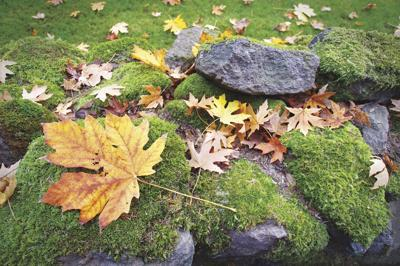 How to address moss in the lawn