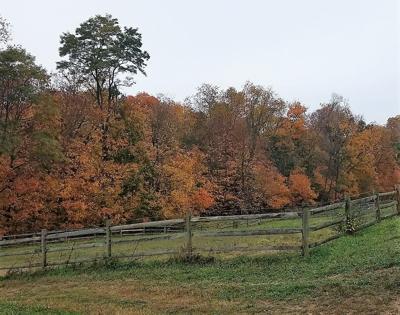 Fall foliage Rob