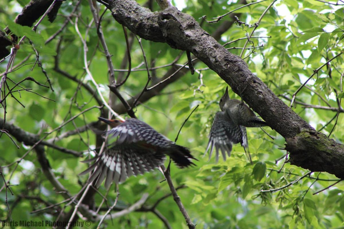 Woodpeckers keep trees in the area healthy