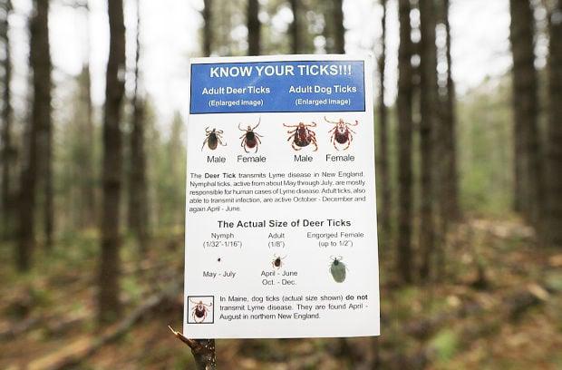 Thriving Ticks