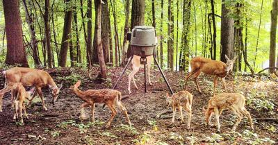 tate deer populations stable