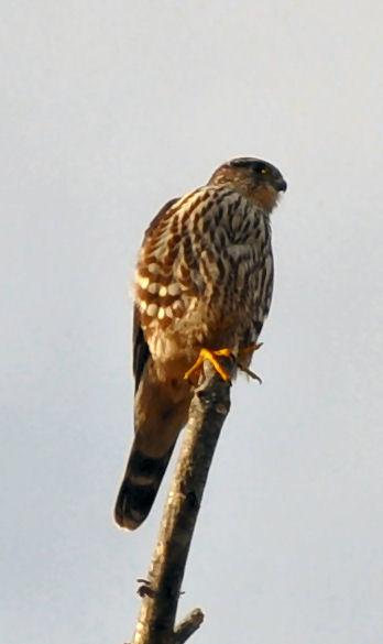 Bird club helps college hopefuls take flight