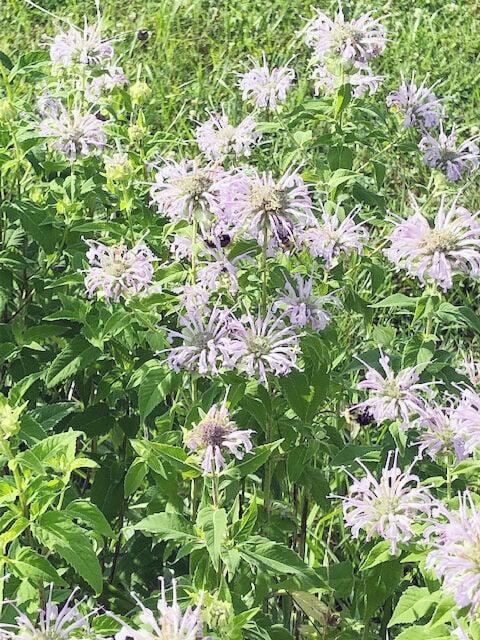 Pollinator gardening: A journey with purpose