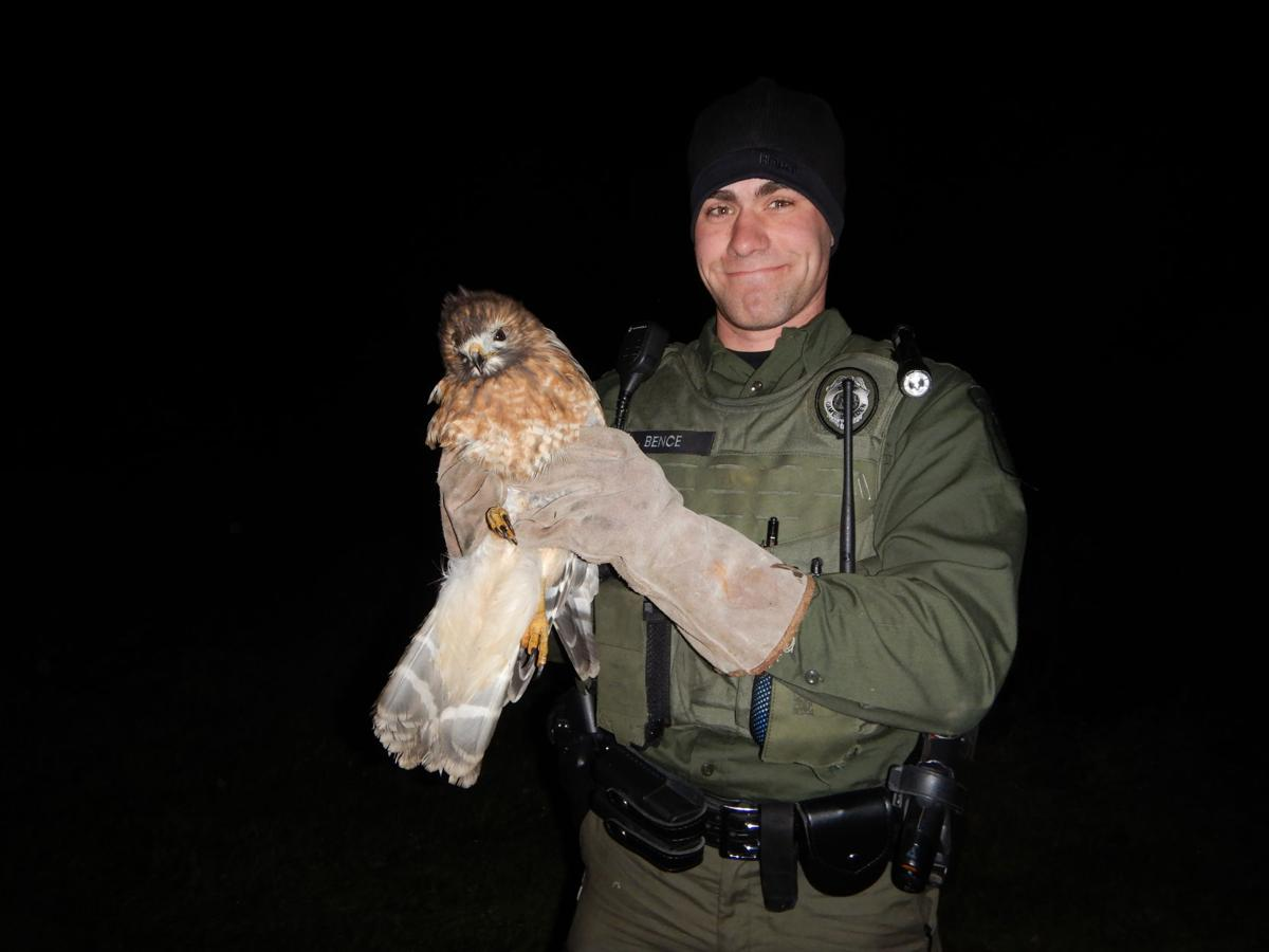 Officer Bence with a rescued hawk