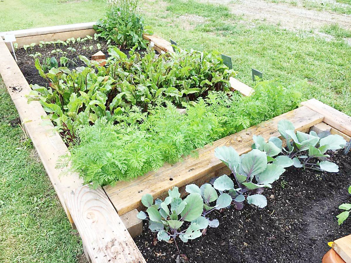 Connellsville demonstration garden