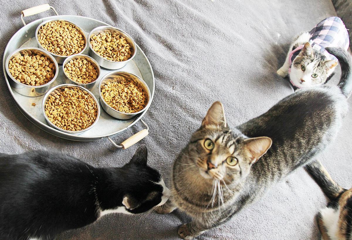 Catnip Acres works to end feline overpopulation | Local News