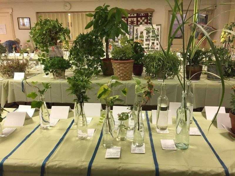 Nursery Rhymes Provide Theme For Local Flower Show