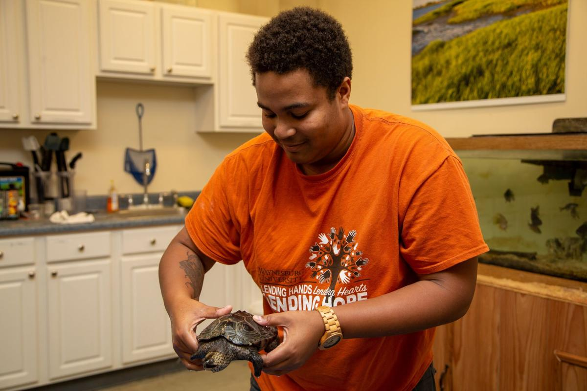 Mrs. Nubs: First turtle to join Waynesburg University's rehab program