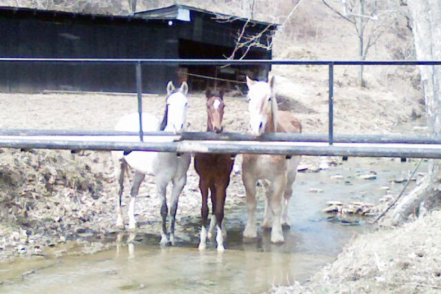 Save-A-Horse Stable struggles to buy feed and hay for horses