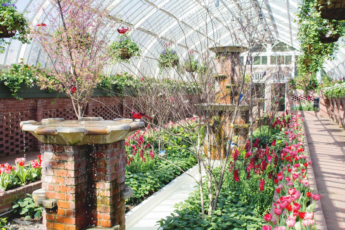 Spring Has Sprung Phipps Spring Flower Show Underway Local