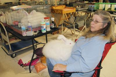 Breeder shows feature more than 800 rabbits, cavies