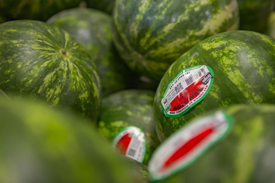 Watermelon Season Arriving Late This Year Local News Hermistonherald Com