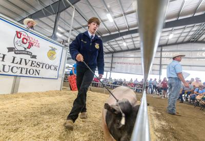 Youth livestock auction