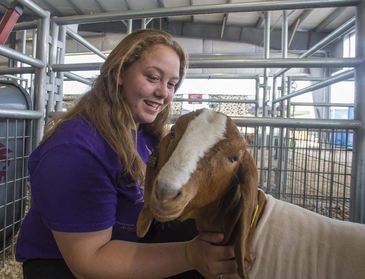 Fair week wraps up with youth livestock auction | Local News