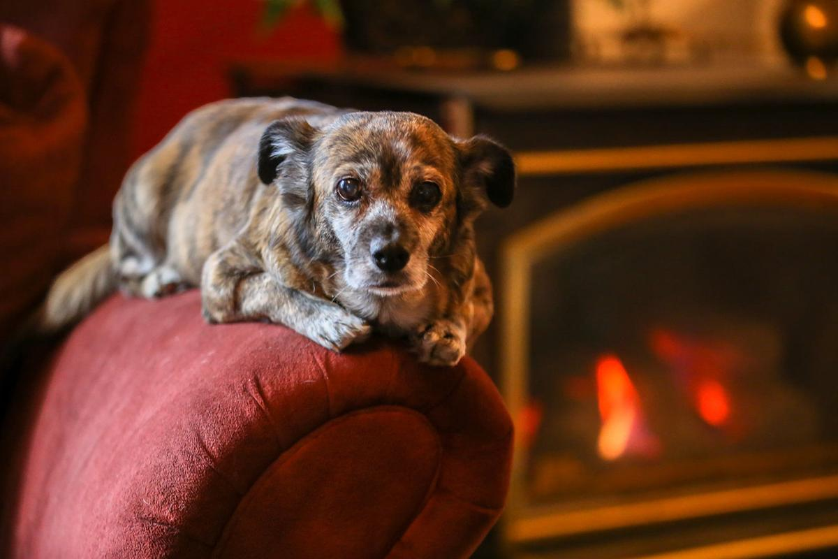 Pet fosters open their homes and hearts