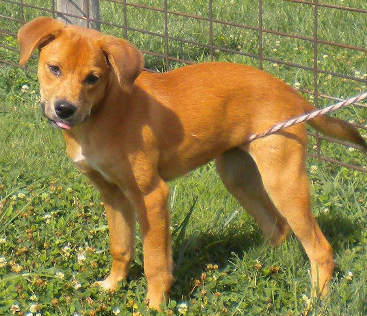 Kansas brown county everest - Brown County Humane Society