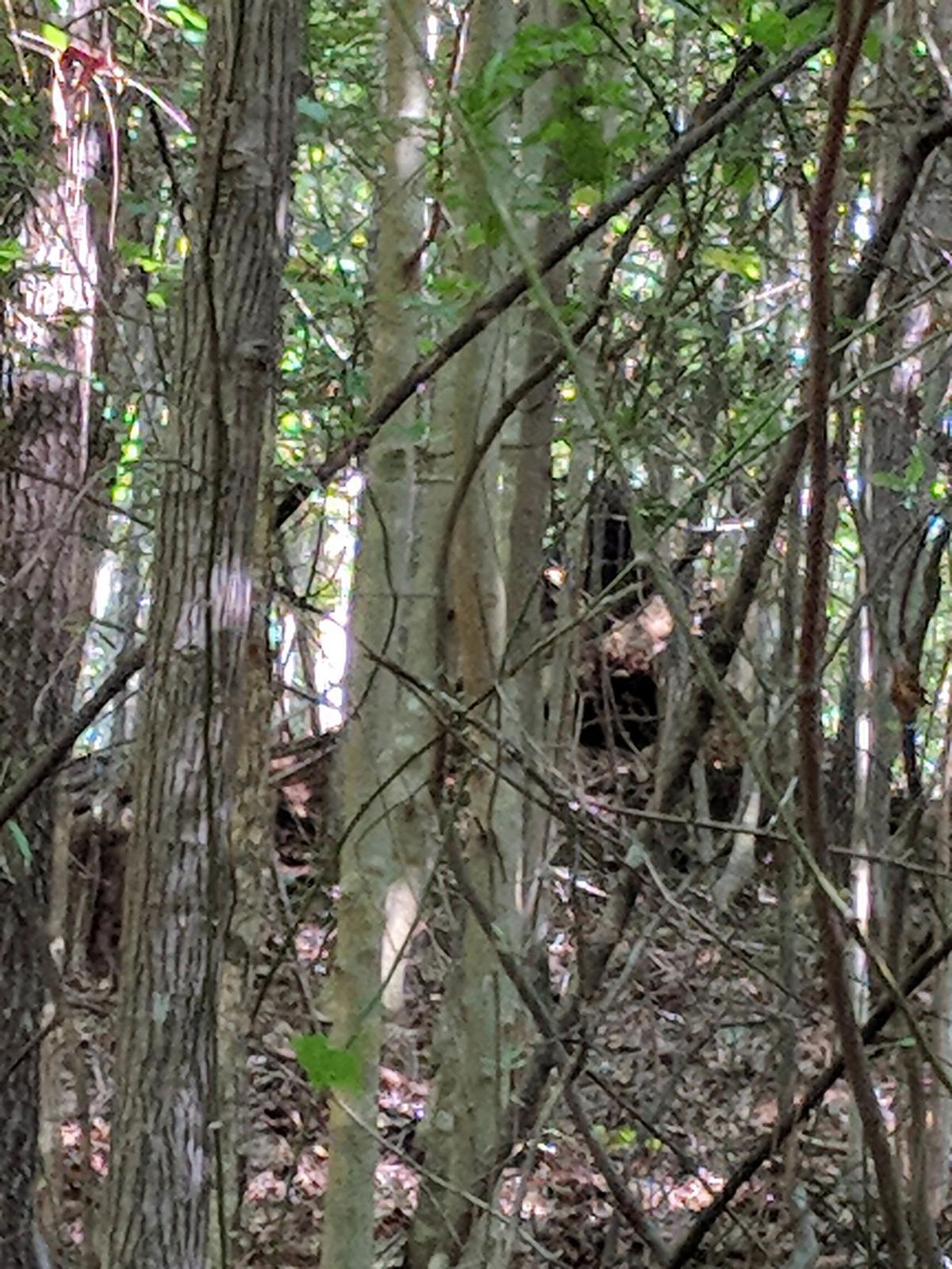 Teague Bigfoot 2.jpg
