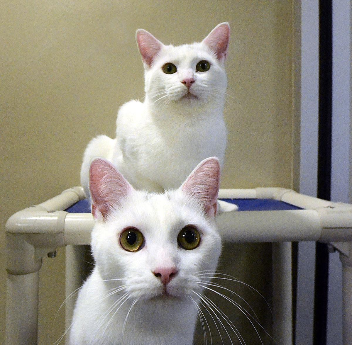 Shelter Kills 87 Cats: Fears Of Highly Contagious Disease