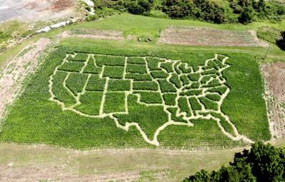 Corn Maze Lee Highway Farms 04