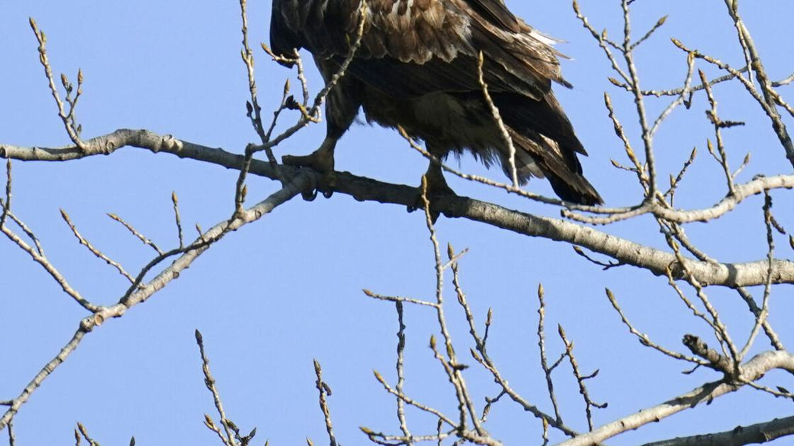 Explore birding during program with park ranger