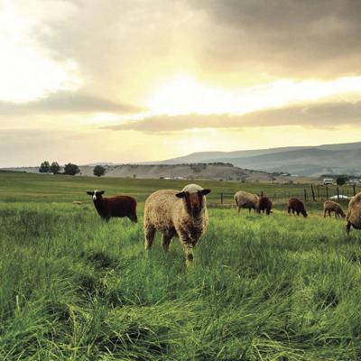 living farm