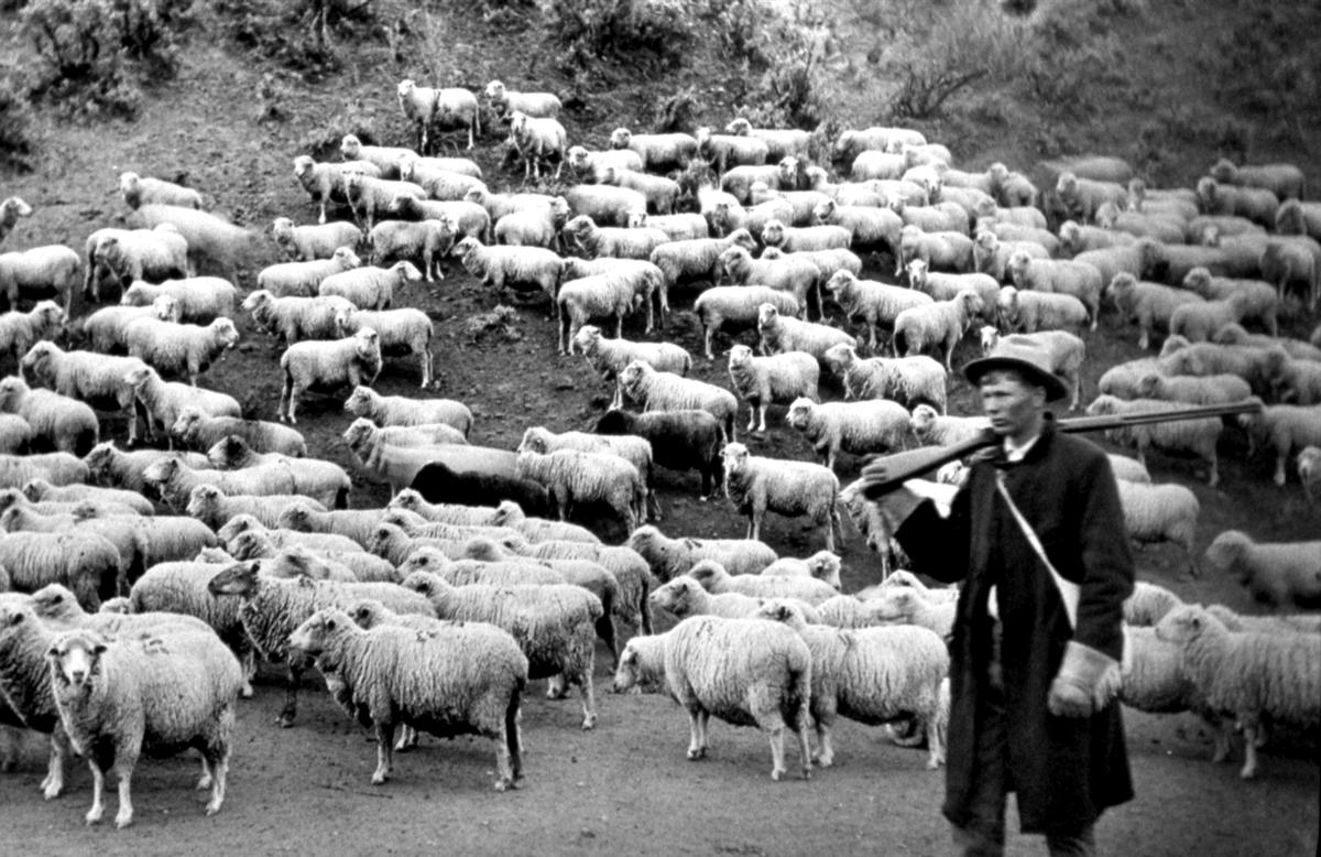 sheep and shepard.jpeg