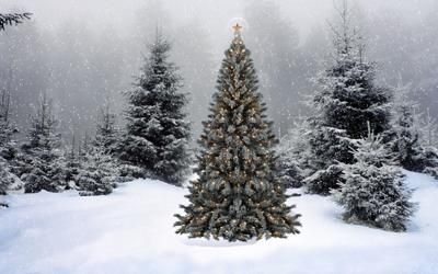 Christmas Tree Permit Montrose Colorado 2020 Christmas Tree Permits can be Purchased at Area GMUG offices