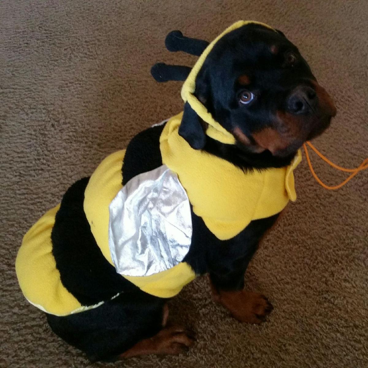 Aurick the bumblebee.jpeg