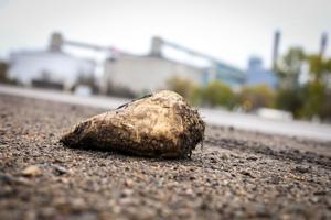 Sugar beet along Highway 81