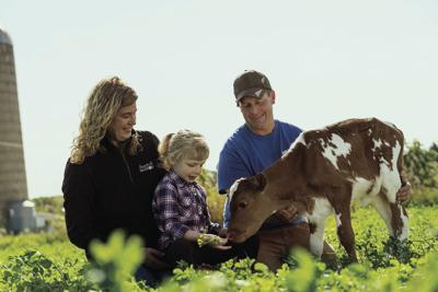 Dairy farmers farm on
