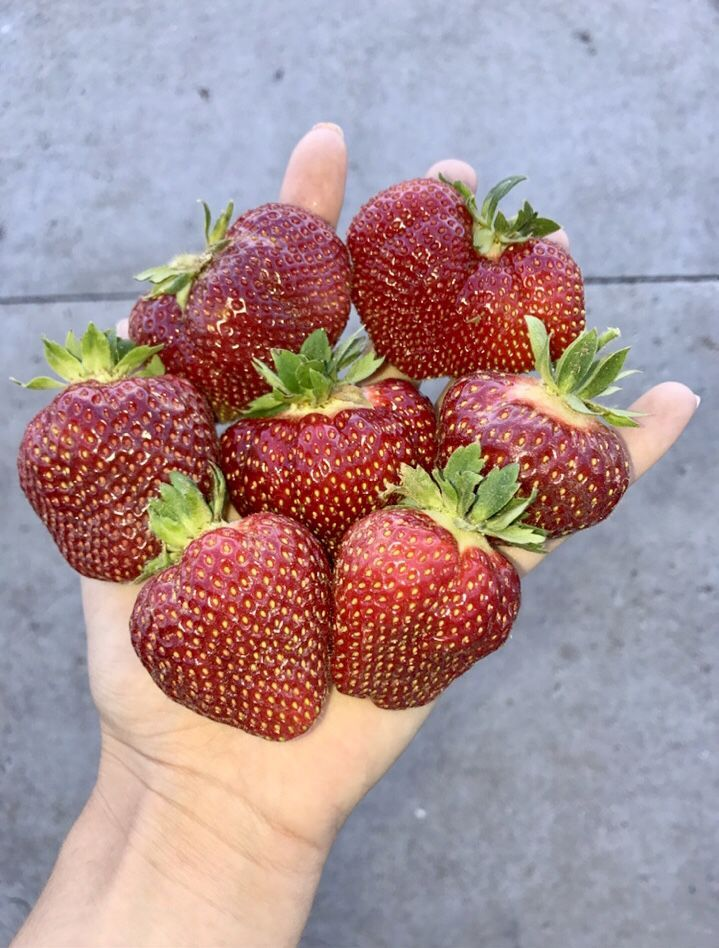 It's berry season!