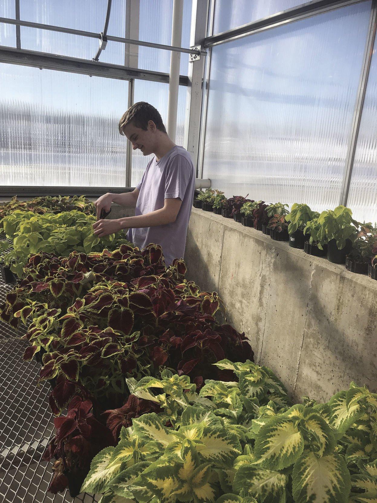 sphs spring plant sale begins may 9 news hngnews com rh hngnews com