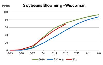 Wisconsin Soybeans Blooming