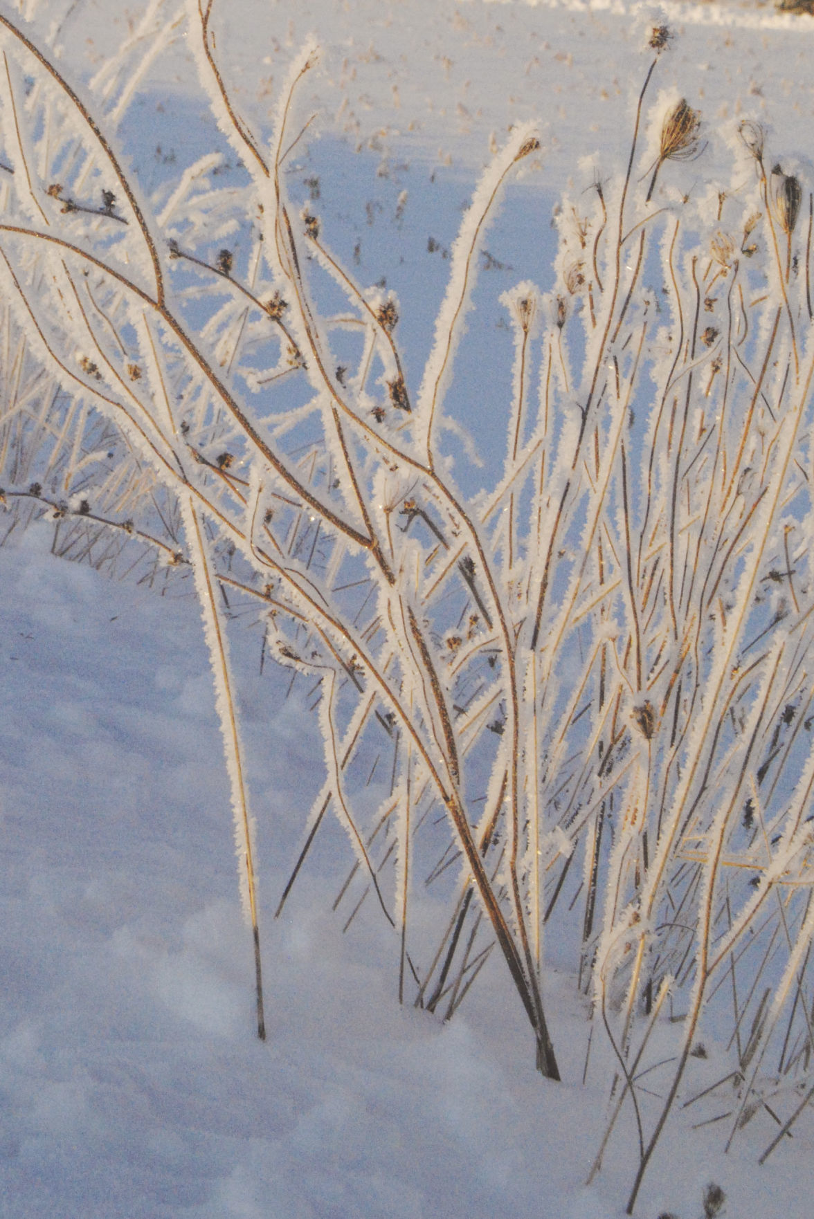 Sunday snow, Monday frost