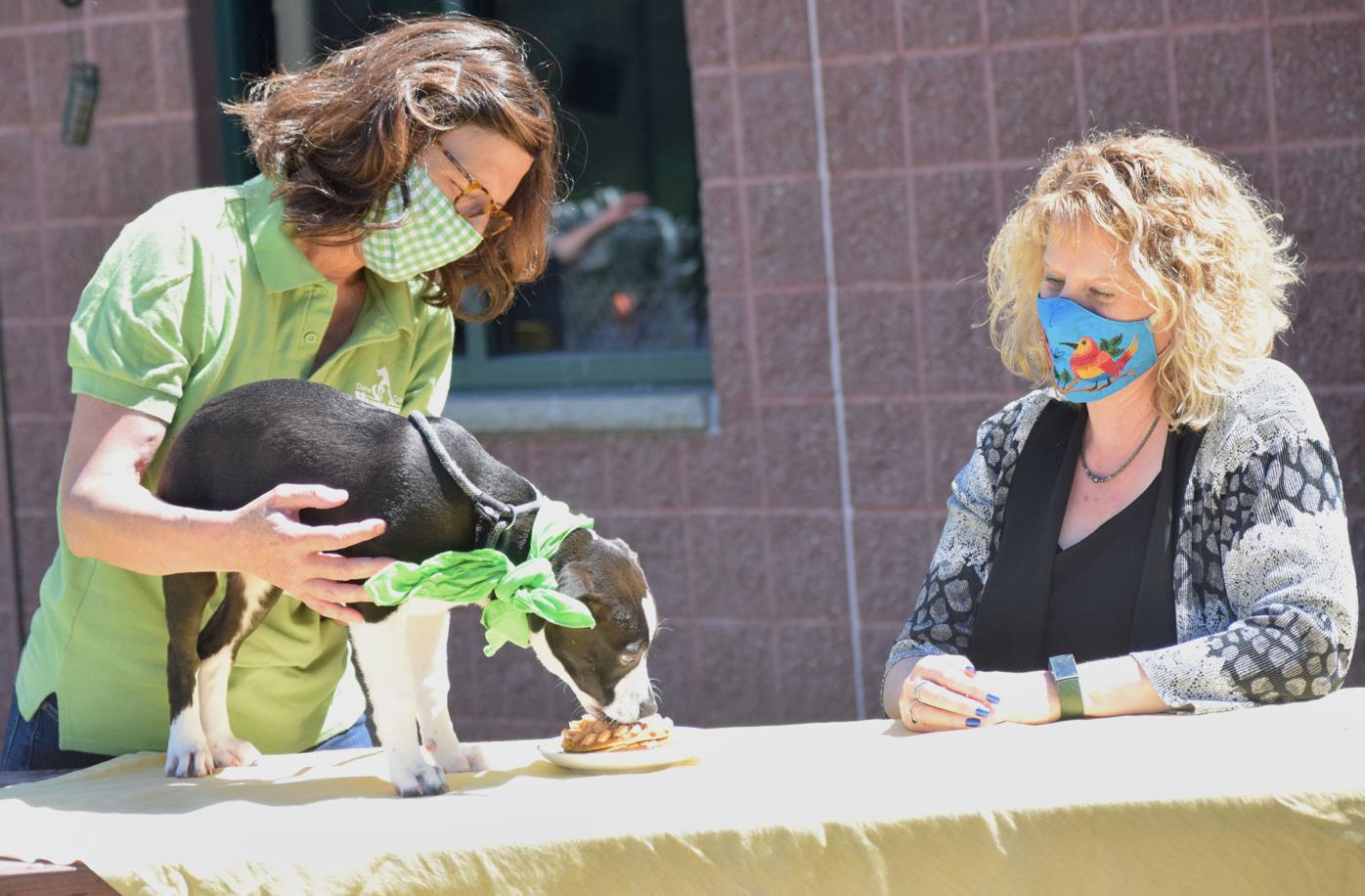 Dane County Humane Society anniversary 2.jpg