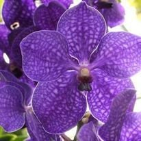 Orchid Escape at Olbrich Gardens