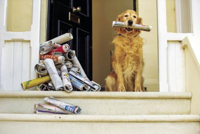 Dog with newspapers