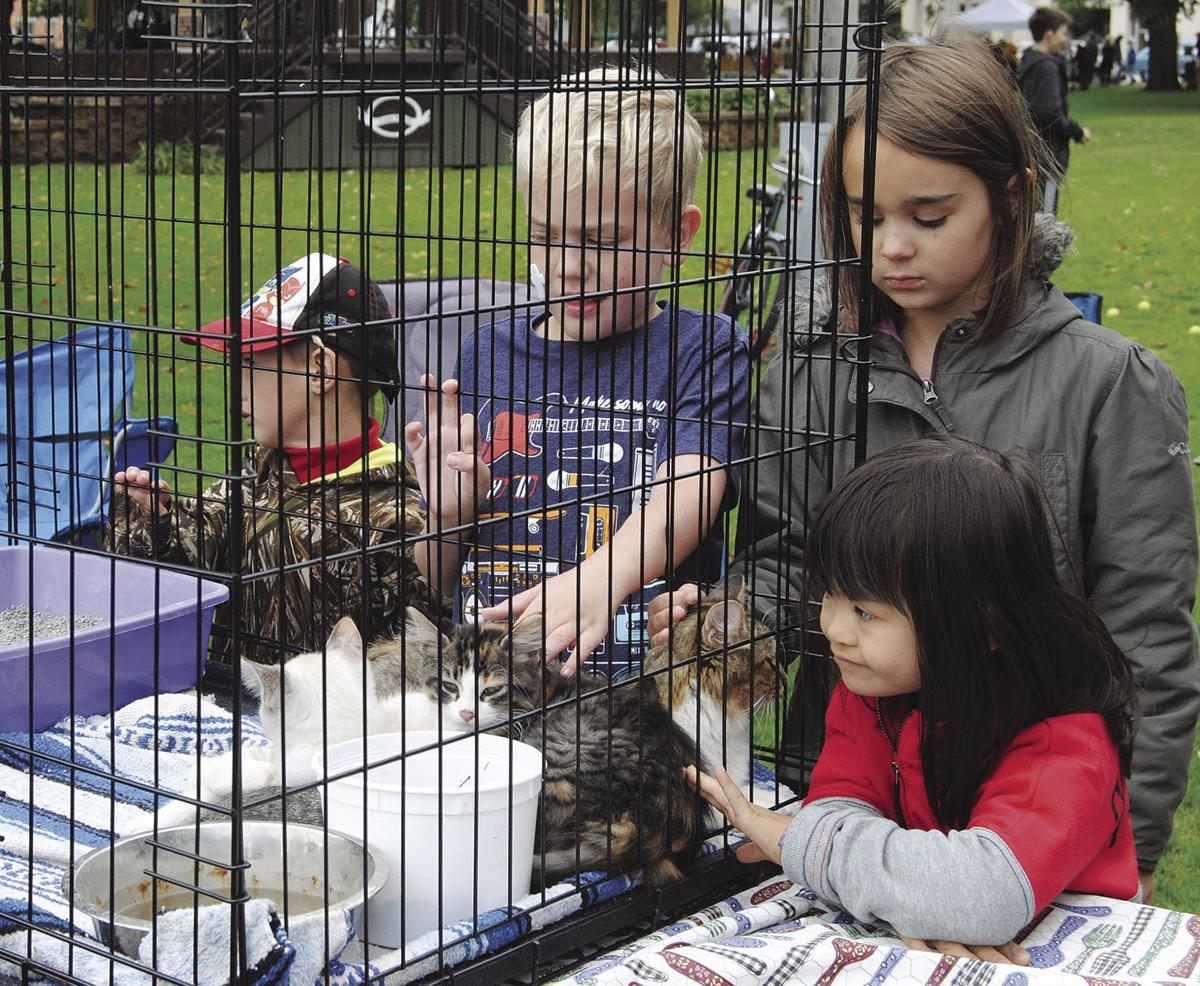 Animals at the Fall Festival