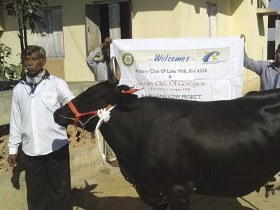 Rotary cow project makes big impact