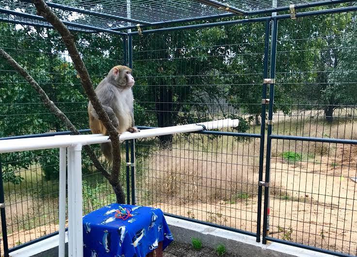 Doing more for the monkeys