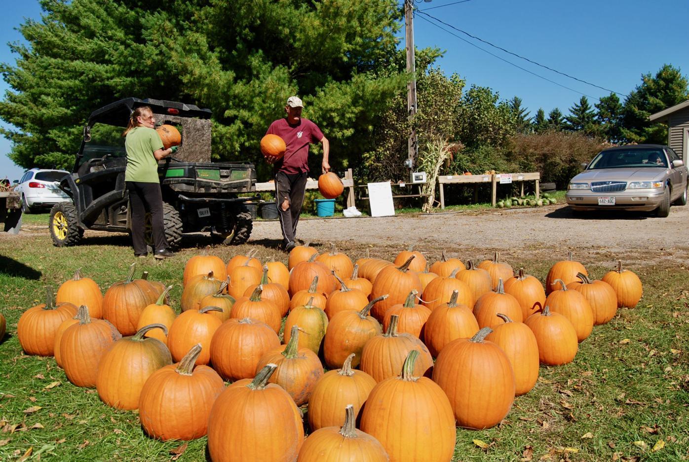 Self-serve pumpkins