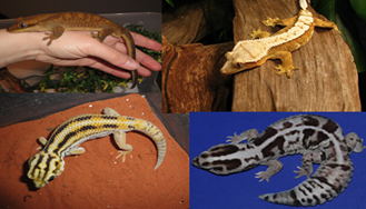 Reptiles and more at June 30 church service